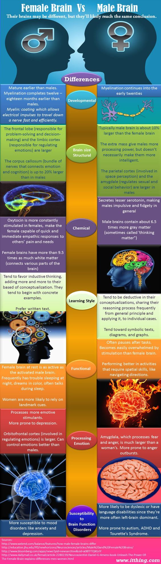 Male brain versus female brain infographic